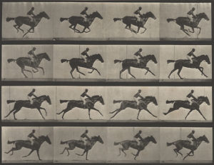 A 12 frame time-series photograph of a horse taken by Eadweard Muybridge